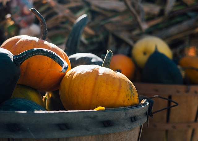 Pumpkins in a basket during harvest season